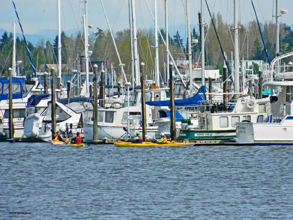 Semiahmoo Marina Group Kayaking.